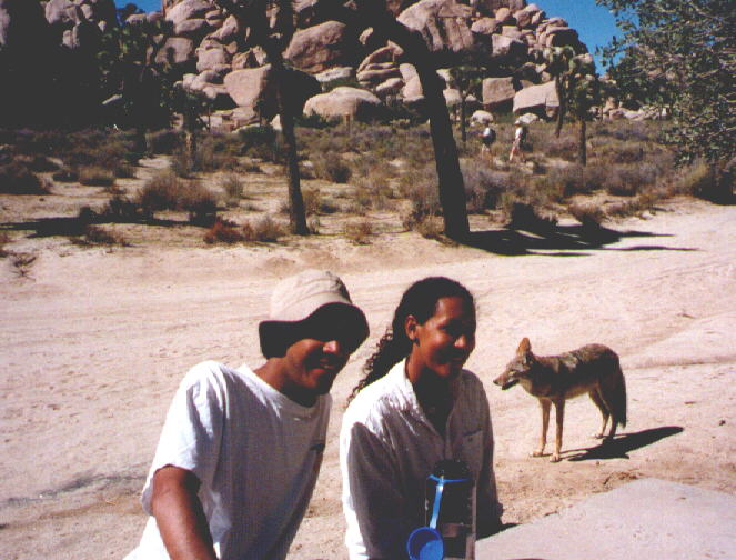 chillbill, turtle and the locals at joshua tree